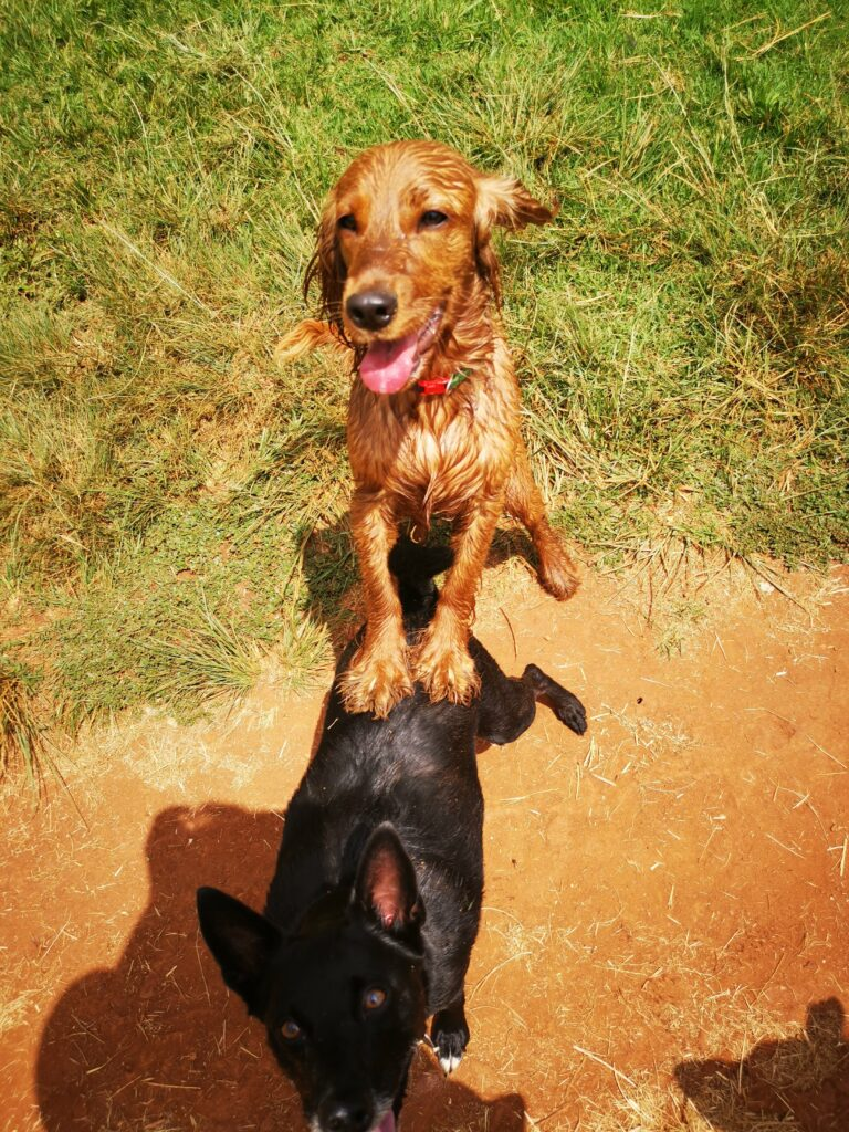 Tesem Dog Training All Dogs Can Be Good Dogs